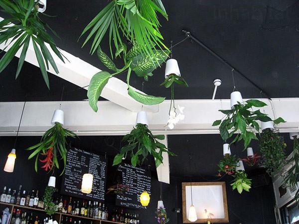 Plantas para interiores - Decoración naturista - Decoración de interiores - Decoración de interiores con plantas - Decoración verde (12)