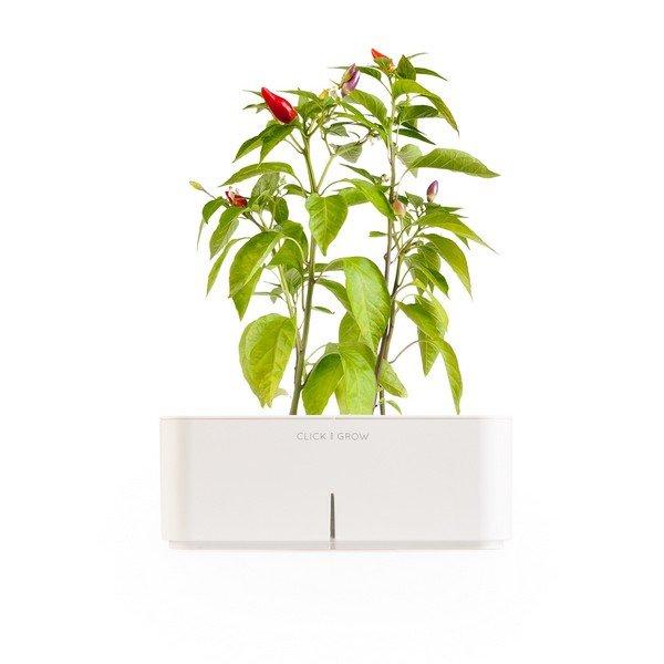 Plantas para interiores - Decoración naturista - Decoración de interiores - Decoración de interiores con plantas - Decoración verde (11)