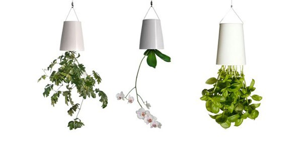 Plantas para interiores - Decoración naturista - Decoración de interiores - Decoración de interiores con plantas - Decoración verde (2)