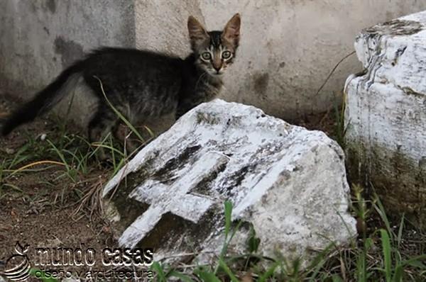 Gato en el cementerio en halloween